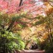 紅葉に出逢いに・・・②(環境芸術の森) 【ひで某】