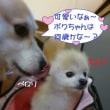 2017 10/21★今日はたろう君・ななみちゃんです(^^ゞ