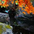 『翡翠』 紅葉の向こうに