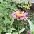 花と蜂さん♪