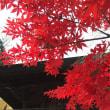 紅葉狩り 東京
