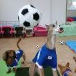 雨の日は室内でサッカー♪  犬のしつけ教室@アロハドギー