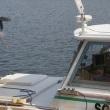 琵琶湖の沖島