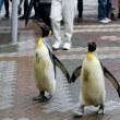 堂々としすぎな王様ペンギン