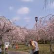 水曜ウオーク(春の遠足 日生さくらまつりへ)