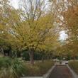 柏の葉公園 バラ園