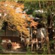 覚園寺の紅葉 (1)