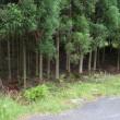 まち歩き左0856 京都一周トレイル 北山東部コース 54-4