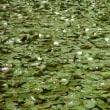 梅雨入り・・・鹿児島の風景