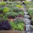 彼岸花が見たくて服部緑地 都市緑化植物園へ 3 (大阪府豊中市)