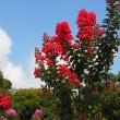 大船フラワーセンター夏の花