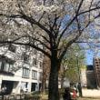 桜も満開、忘れっぽさも全開!!