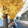 ドールお散歩ロケ学校の銀杏並木 2017y 1203 1280x720