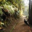 飼い主に容赦ない山散歩