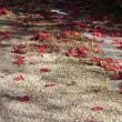 紅葉一葉、散る影を待つ