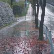 雨の歩道にて