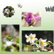 庭に咲く小さな春~