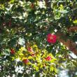 早春の鎌倉散策