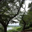 多摩川台の紫陽花