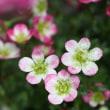 3/20  今日の花たち・冷たい雨・・・