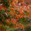 東京で紅葉狩り