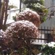 お彼岸のお中日に雪が降り、妹と食事を。忘れられない日に。