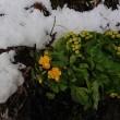 いよいよ春になってきました!