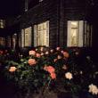 旧古河庭園のバラ ライトアップ・・4