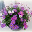 ◆花と星と愛と