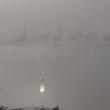 霧日と白鳥<エッセイ風>