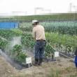 農研、キュウリ・トマト・ピーマン・茄子・スイートコーン・消毒