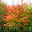 秋の深まり~展望台清掃実習現場より~