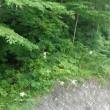 棚 田 に ある 竹組みの 休憩所