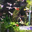 水草、熱帯魚