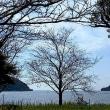 今日で23周を完歩!びわ湖勝手気まま歩き・永原~長浜!