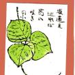 葛の花、秋の七草のひとつ、風情がある