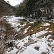 2019年初の面河渓雪景色