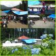 平成30年6月17日・つるぎ町一宇のアジサイ祭り行ってきました!