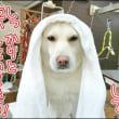 ミミちゃんの定例シャンプー体験記