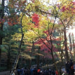2018小國神社の紅葉