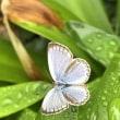 繁殖力の強い害草「クズ」の花