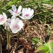 春のお花はもぅチョット。