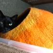 黒猫とオレンジ繭