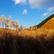 奈良県の曽爾高原(そにこうげん)へ