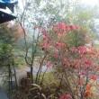 11月23日(水)勤労感謝の日、通常営業です。