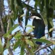 オーストラリア ケアンズの鳥さんNo9