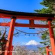 新倉山浅間公園の桜と富士 2018 その2