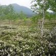 樹木ウォッチング冬から夏へ375イソツツジ
