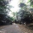 屋良城跡公園