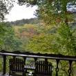 秋晴れ、青空に紅葉始まる午後の森。